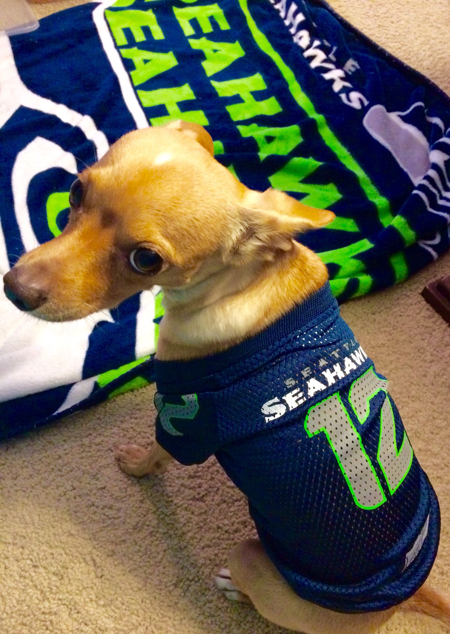 My Girl Charlie is THRILLED with her new #Seahawk jersey