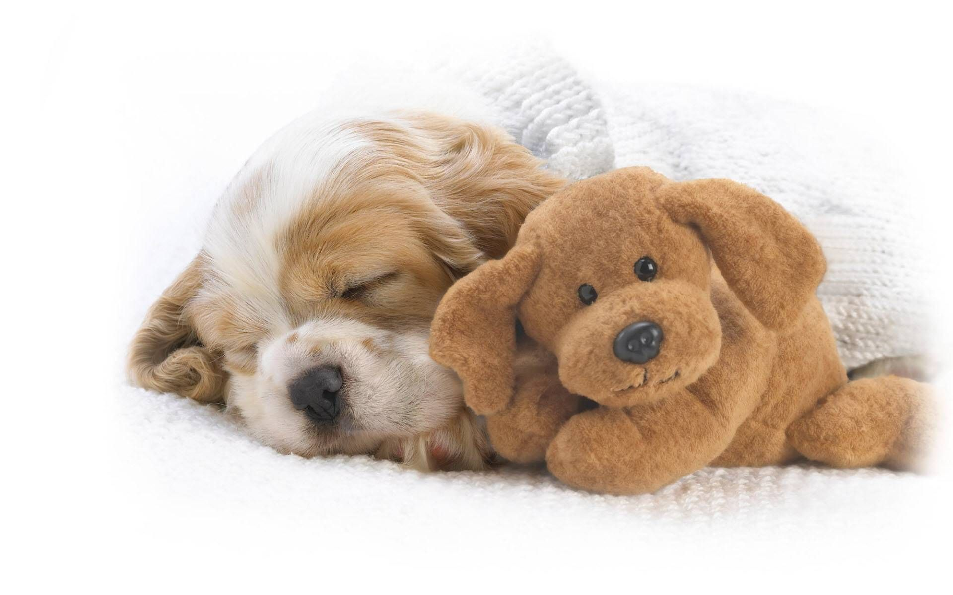 Cute Dogs And Puppies Wallpapers Wallpaper Cave Sleeping Animals Sleeping Puppies Funny Sleeping Animals