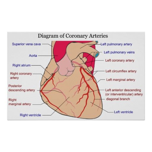 Diagram of the Coronary Arteries of a Human Heart Poster | Anatomy ...
