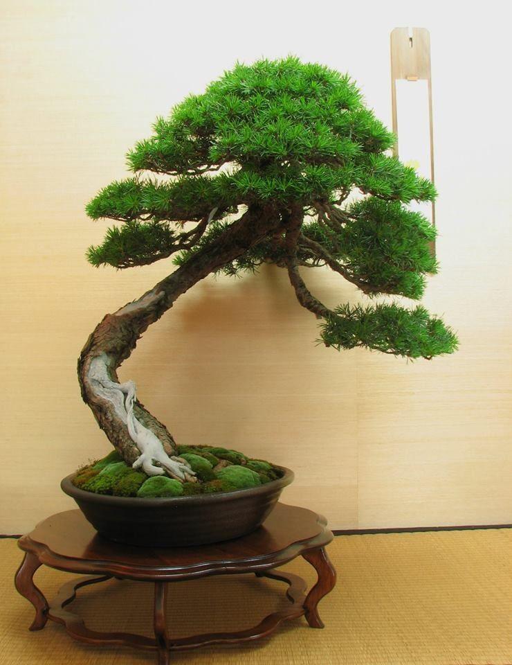 Bonsai bonsai styles bonsai tree small trees