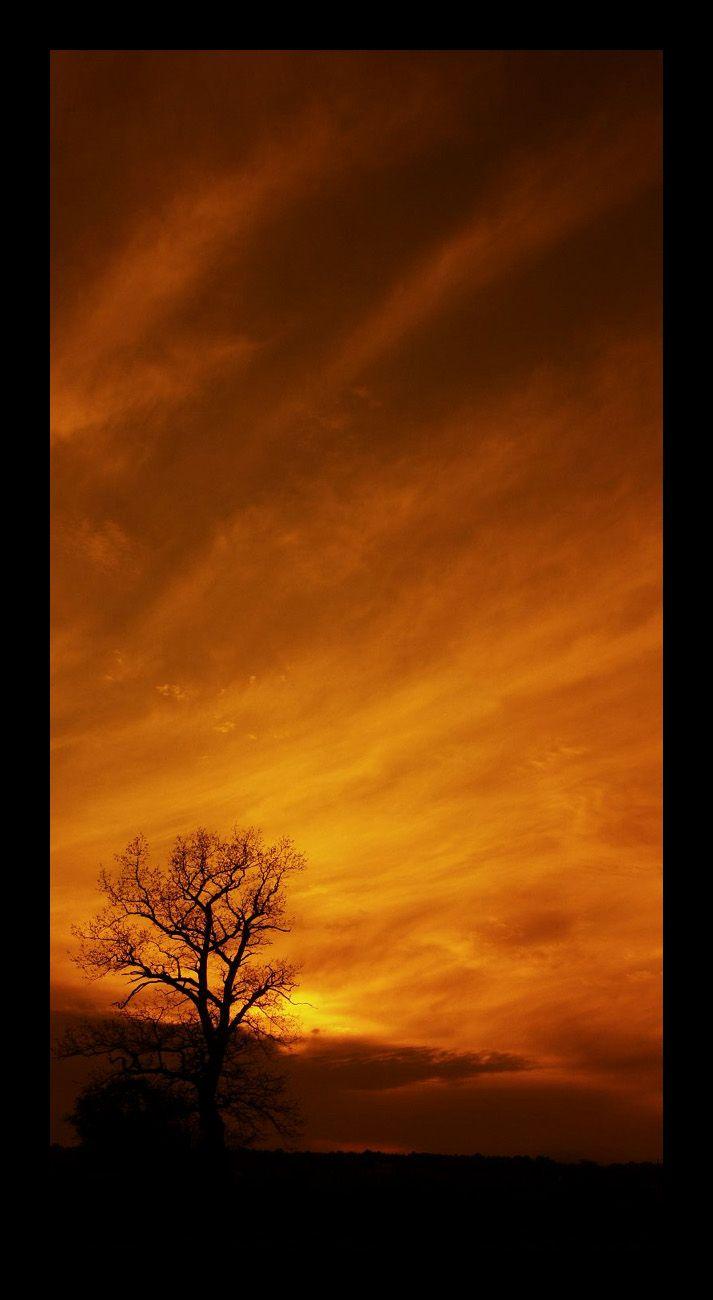 Beneath a copper sky ~