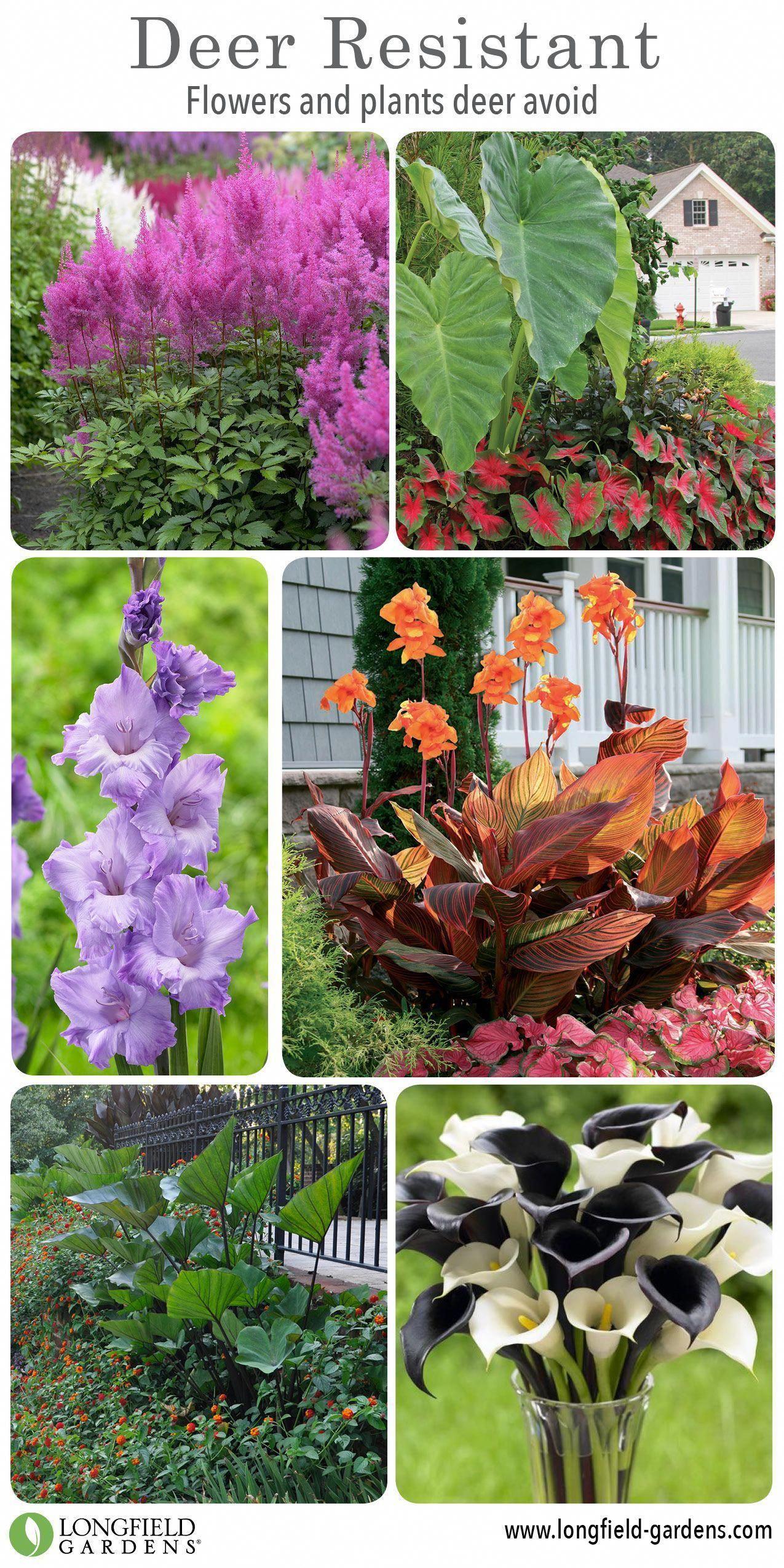 60 Deer Resistant Plants For Your Garden