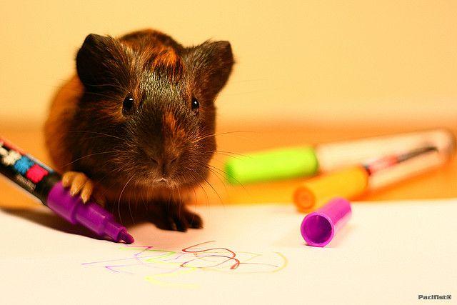 artist guinea