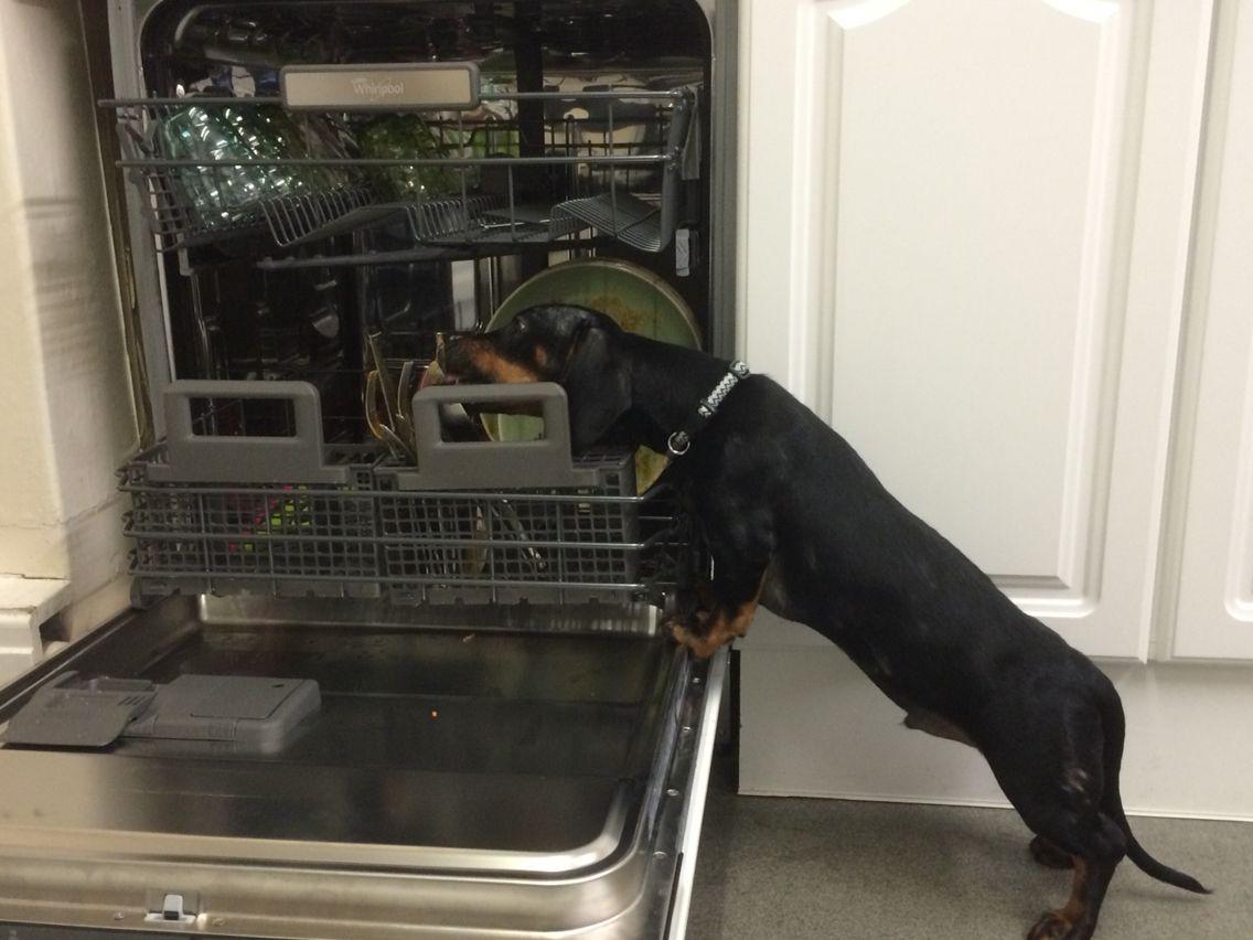 Latest whirlpool dishwasher with auto sense prewash cycle