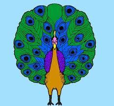 pavão desenho - Pesquisa Google