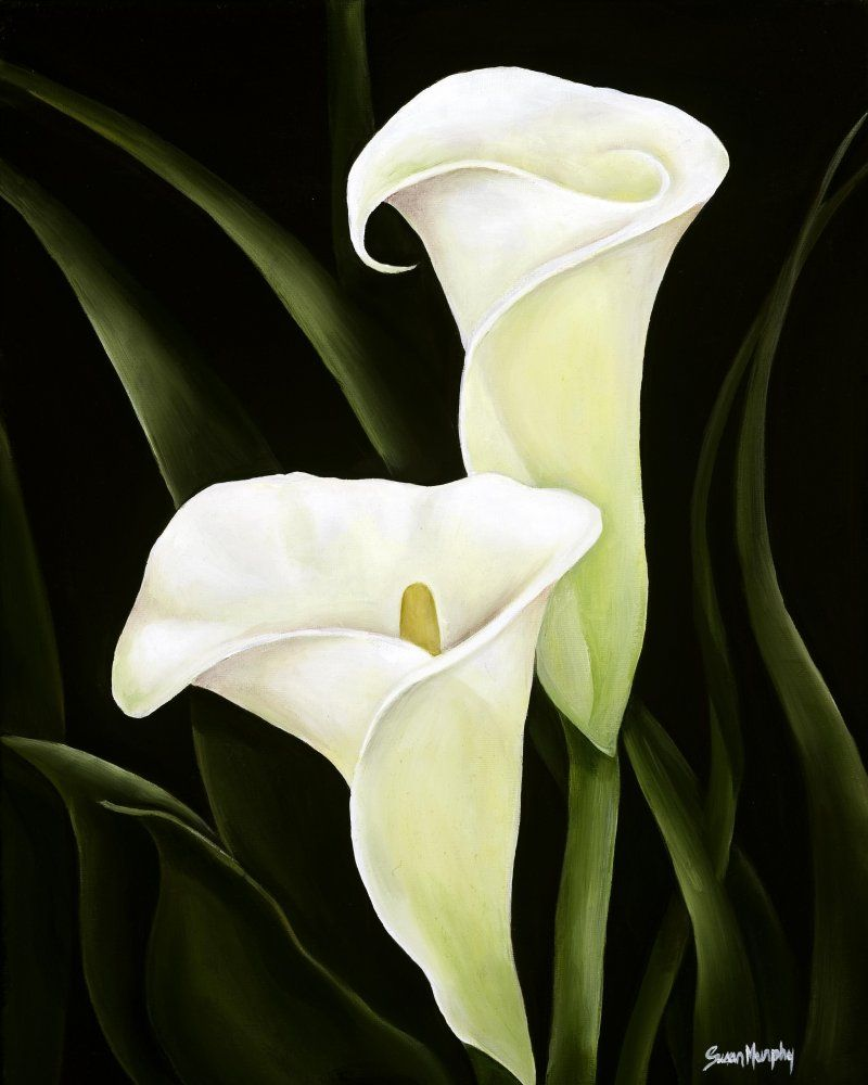 calla lilies, by susan murphy | FLOWER REFERENCE ...
