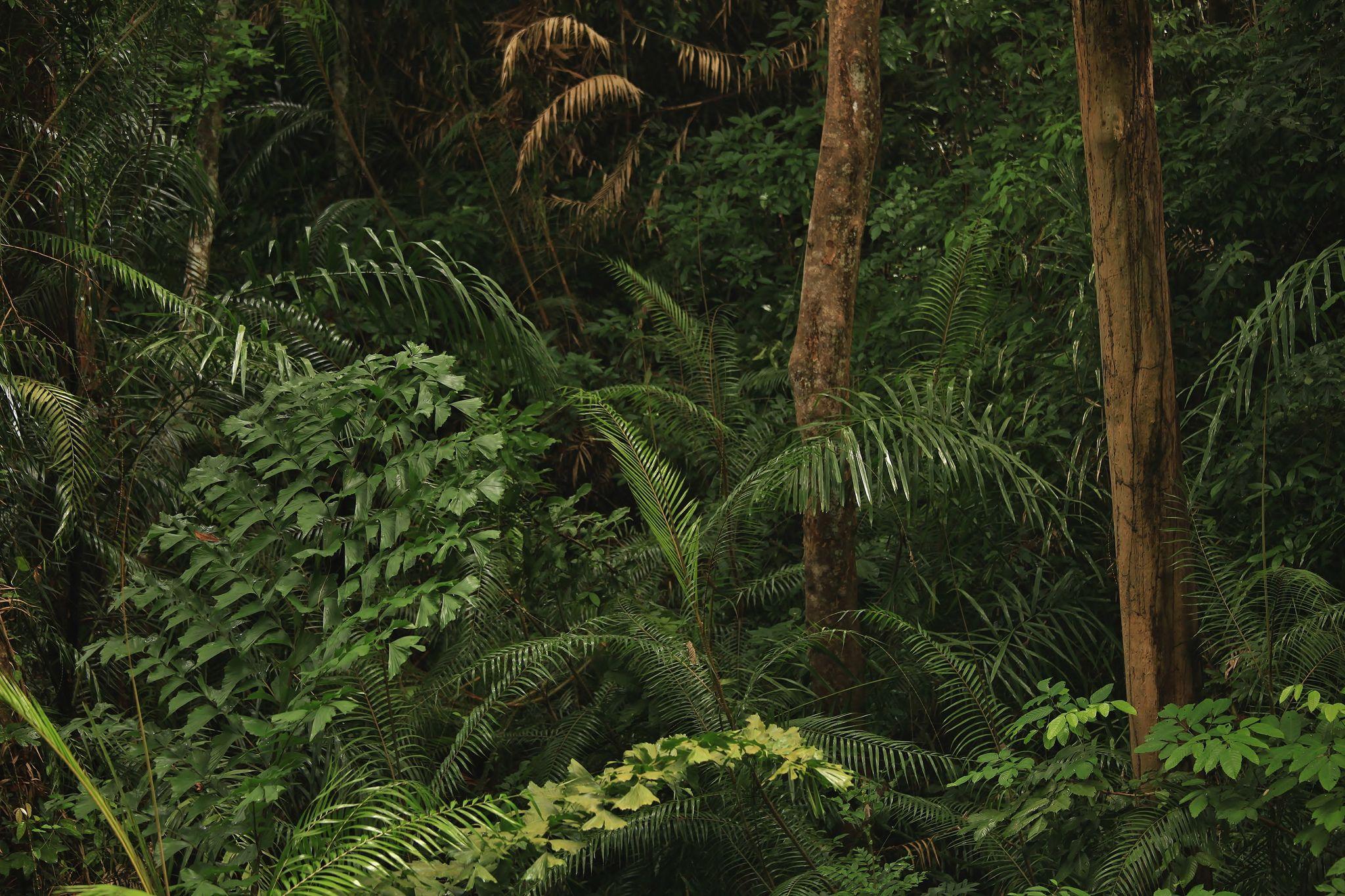 Httpsflickrp25Ejecj - Img 2151 Jungles On Langkawi