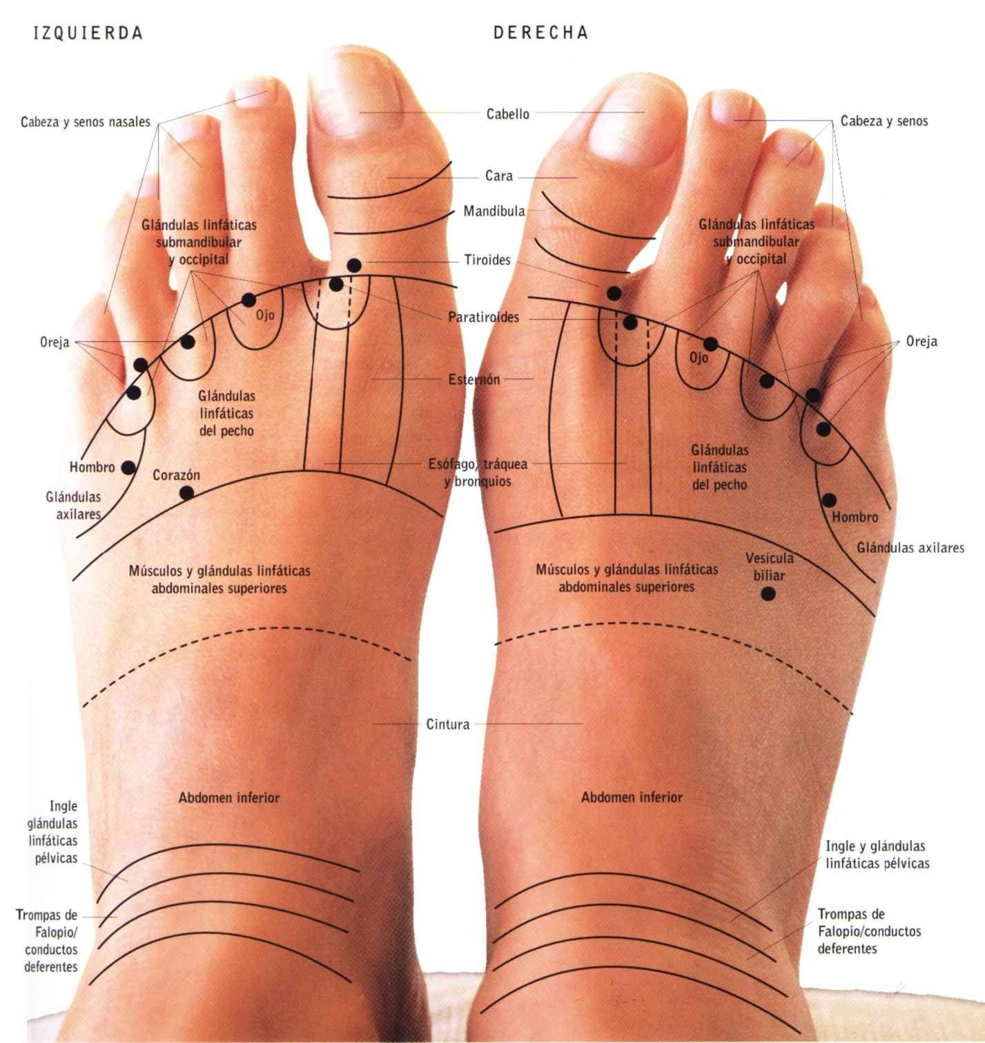 Media dedos de los pies