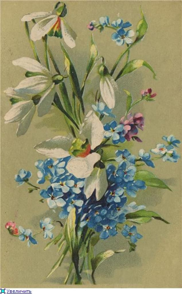 Открытка с цветами незабудки