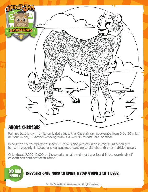 Cheetah Animal Jam Academy Desenhos Para Colorir Desenhos