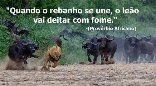 Frases Do Facebook Quando O Rebanho Se Une O Leão Vai Deitar Com