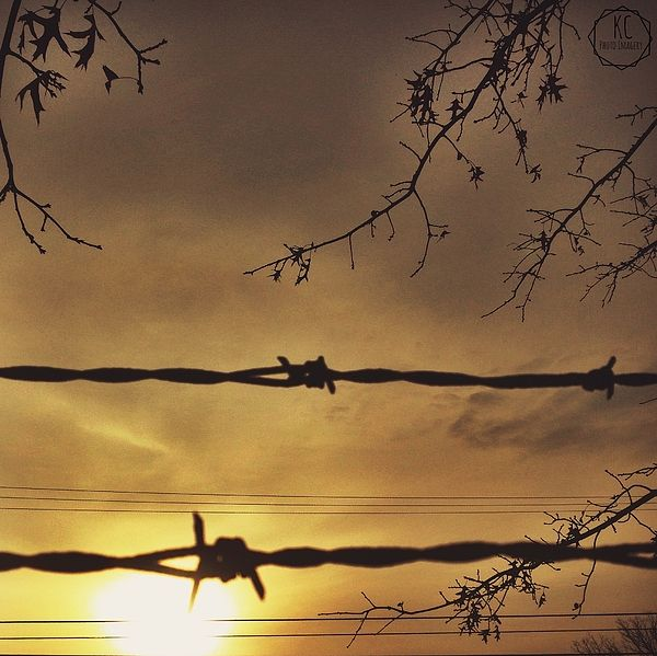 The rising sun hidden behind clouds, tree branches, and barbed wire.