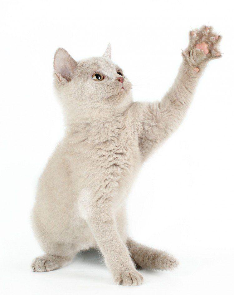 CAT NAIL TRIMMING A BEGINNER'S GUIDE Trim cat nails