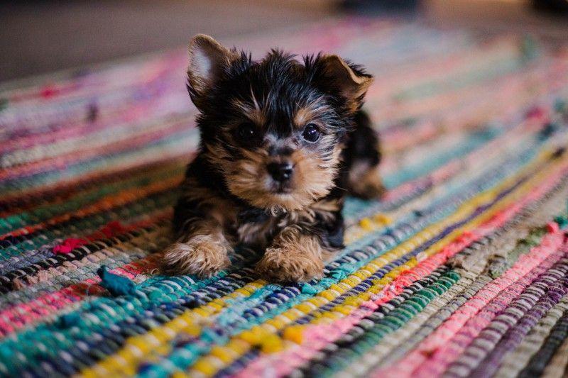 Pin Auf Hund Hacks Labrador Alles
