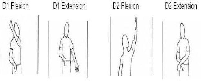 Pnf D1 Flexion D1 Extension D2 Flexion D2 Extension Diagonals