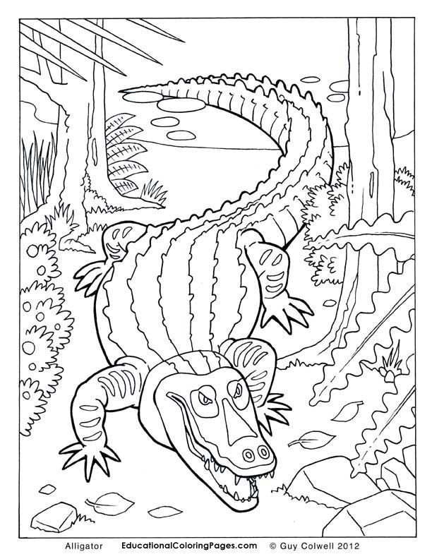 coloriage animaux✖️More Pins Like This One At FOSTERGINGER ...