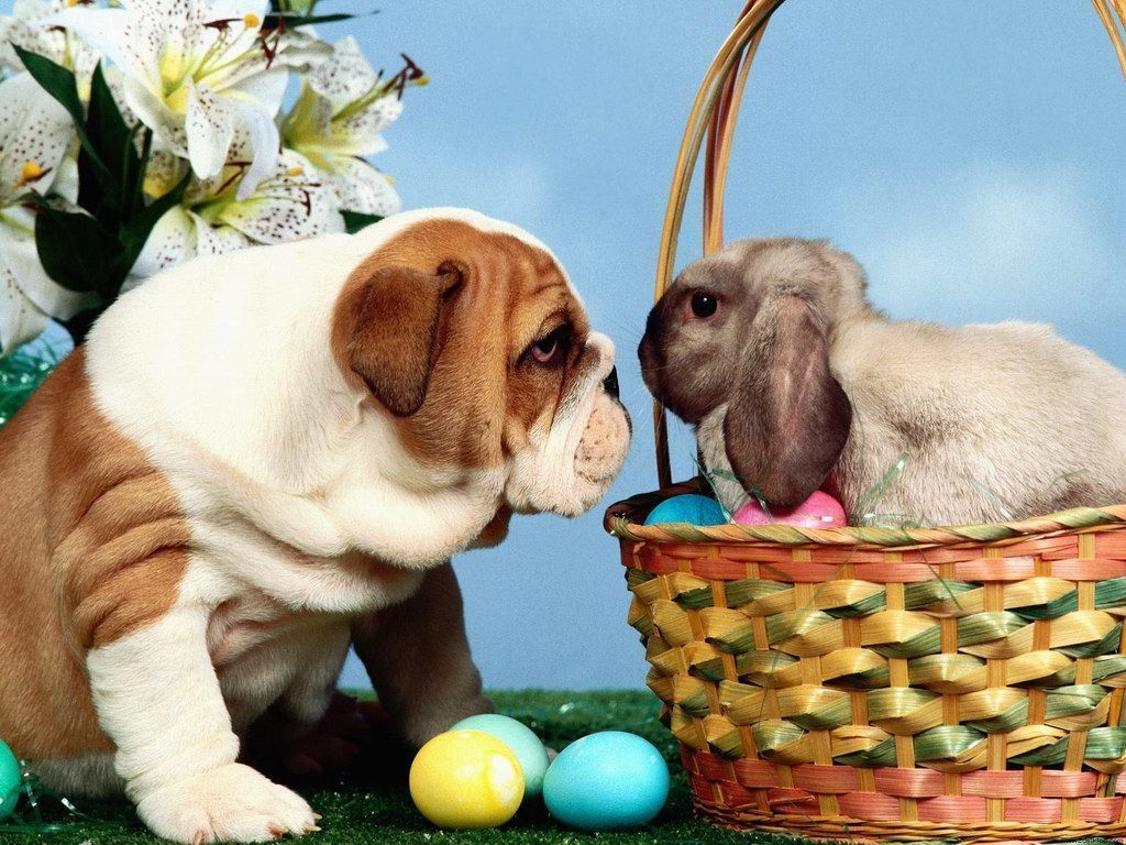 Cute Easter Wallpapers Group 1024x768 33