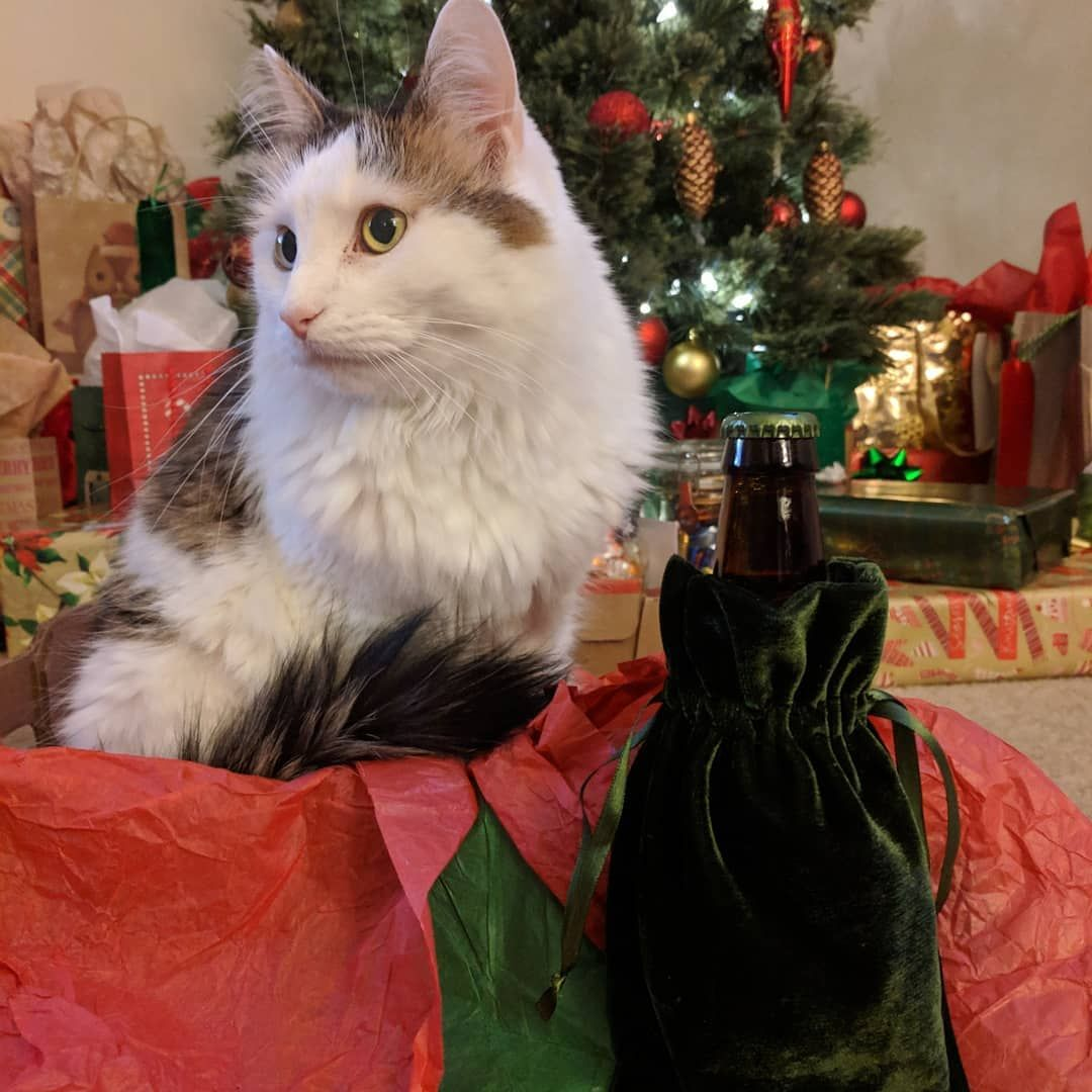 Watson And Aurora Were Shocked To Find A 25th Beer Hiding Under The Tree Watson Opened It Up To Find Krampus V An Oat Wine Merry Krampus Merry Kittens