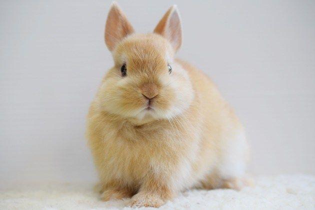 うさぎベビー情報 うさぎ 動物 ウサギ