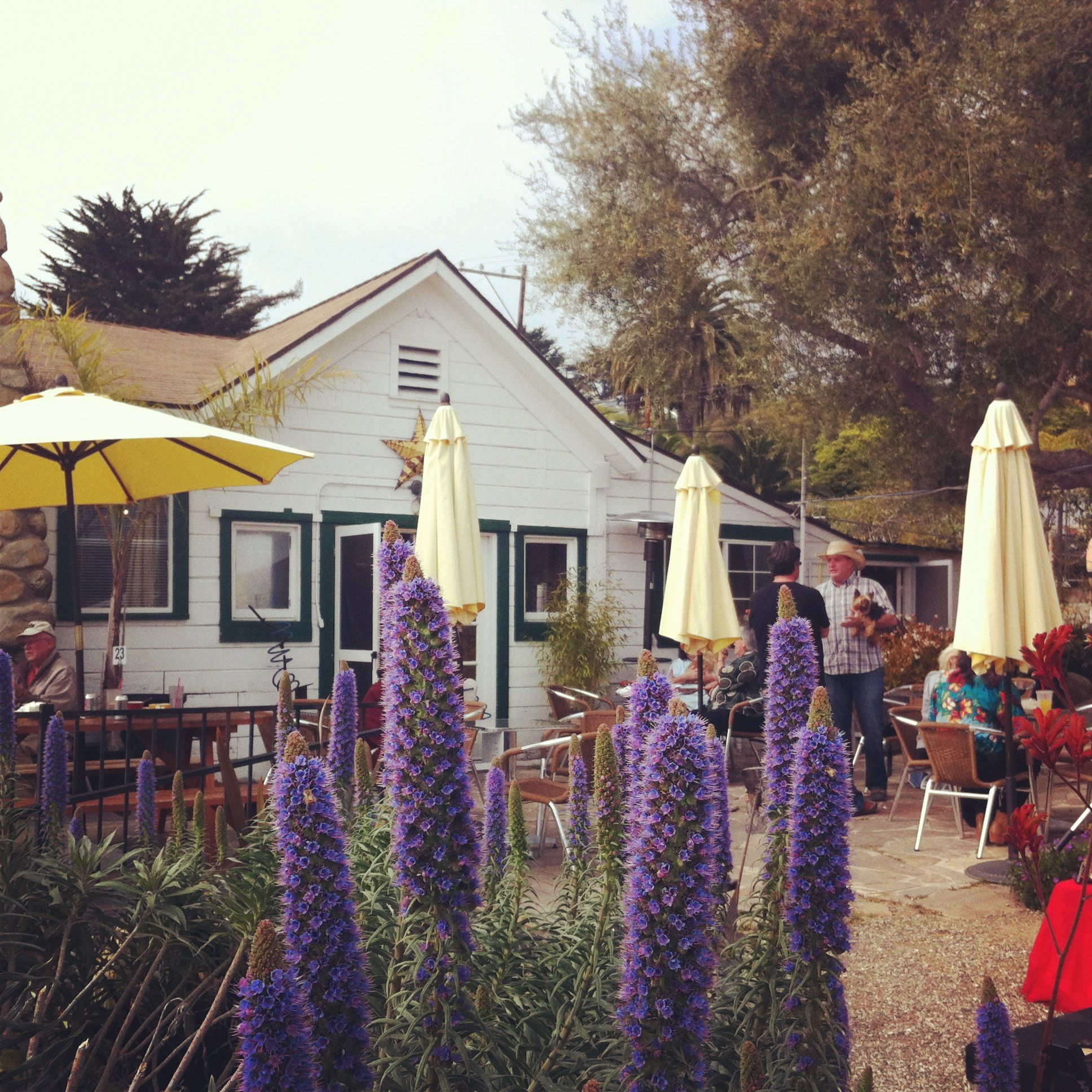 Christmas Tree Farm Southern California: Coffee Stop In Summerland, CA