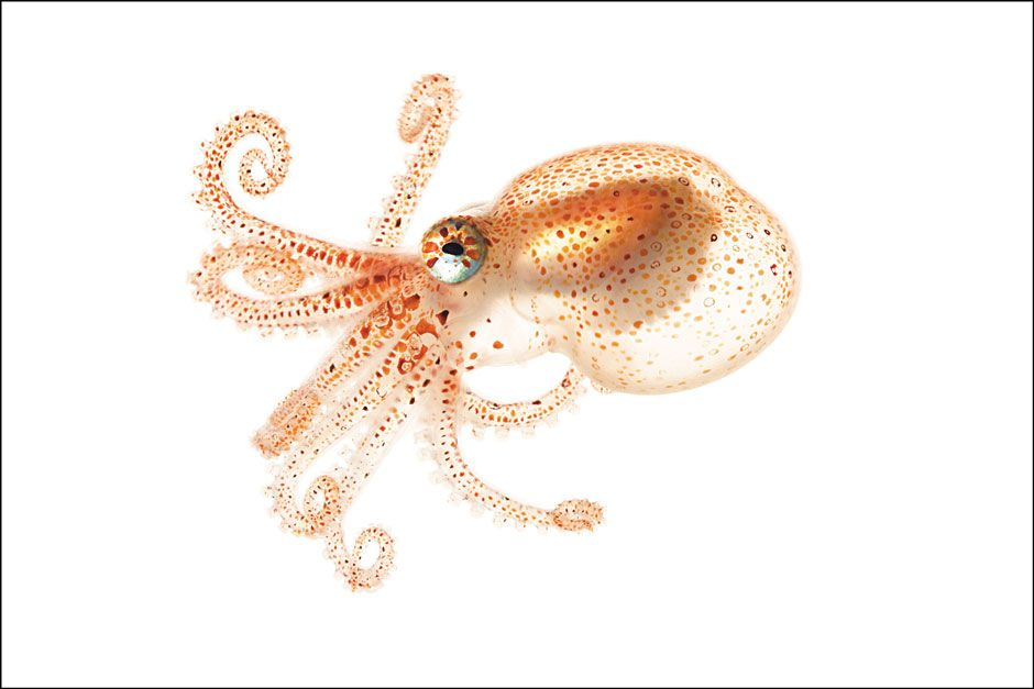 Lilliput Under the Sea by Tim Flannery   The Gallery   The New York Review of Books