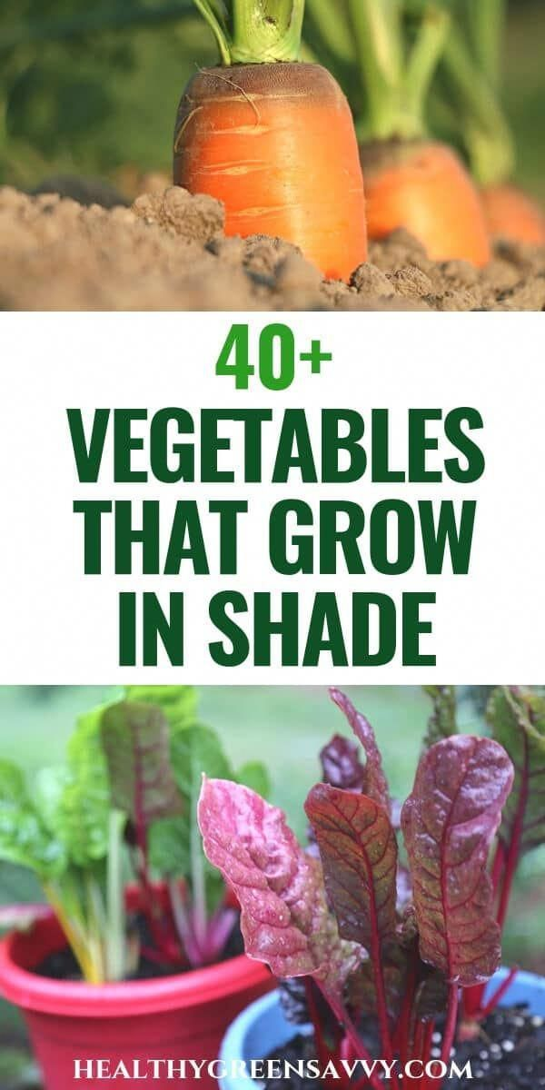 Did you know there are vegetables that grow in shade? If you have a less sunny garden, these 45 crops could help you grow more food this season. #gardeningtips #shadegarden #vegetablegrowing #ediblelandscaping #garden #vegetablegarden