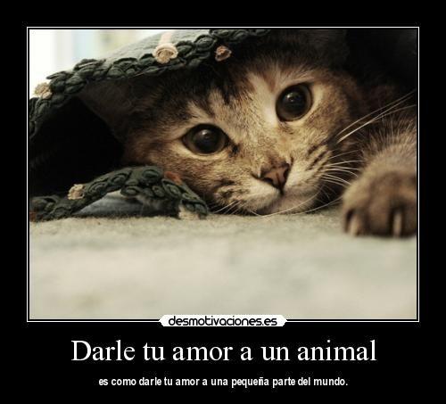 Imagenes De Amor Con Animales Con Frases De Amor Memes Pictures