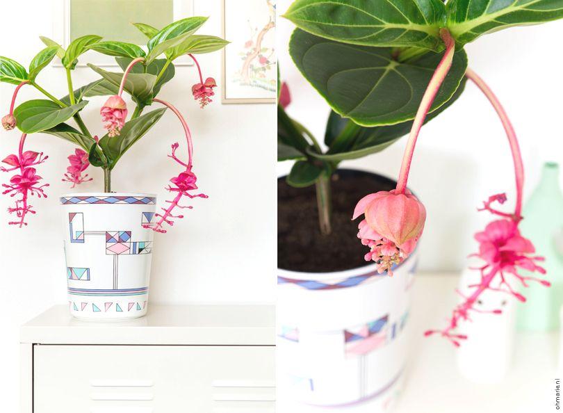 Vintage trash can becomes planter for Medinilla Flamingo plant via @ohmariemag