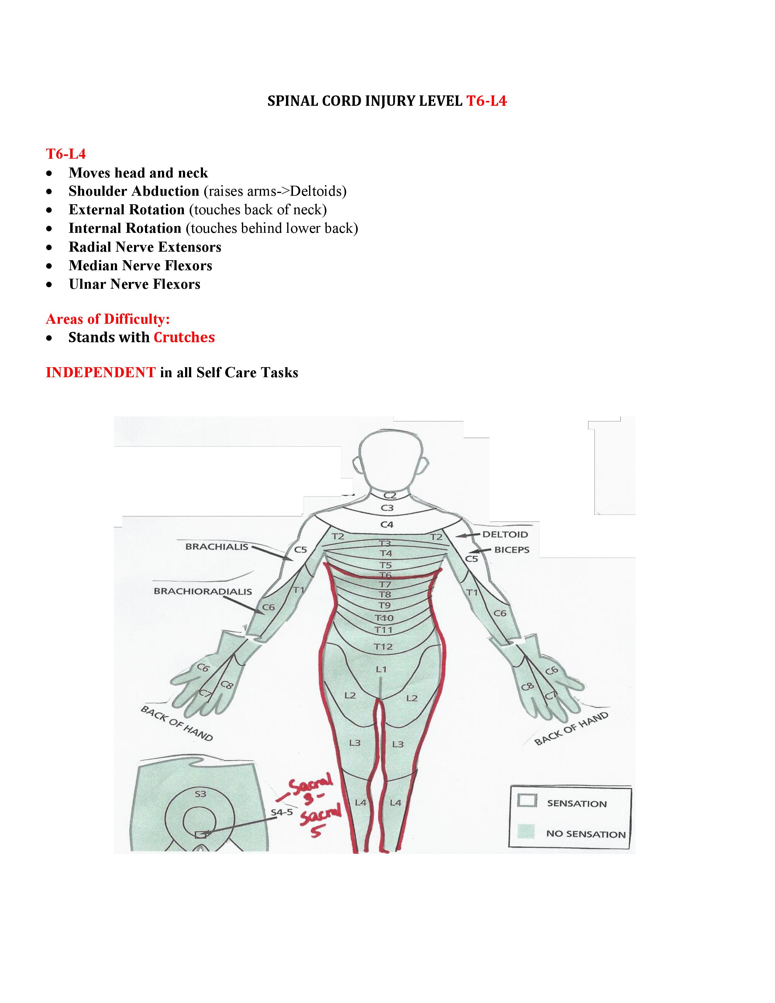 Spinal Cord Injuries T6-L4 | Cota exam | Pinterest | Anatomia ...