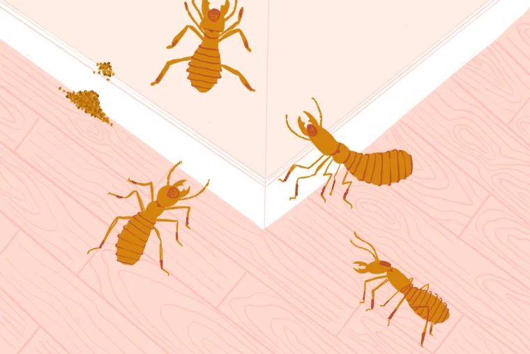 How to Prevent and Get Rid of Termites, According to