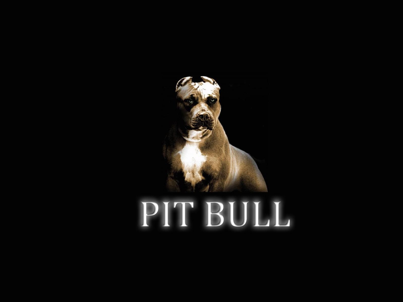 Pic New Posts Wallpaper Apbt Pitbulls Dog Wallpaper Dogs Pitbulls