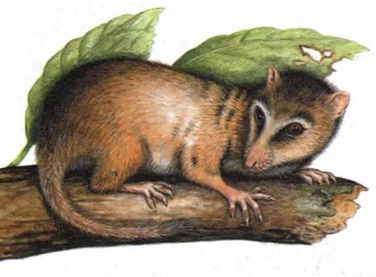 Placental Mammals Features