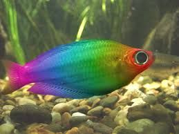 Image Result For Real Colourful Tropical Fish Rainbow Fish Fish Tropical Fish