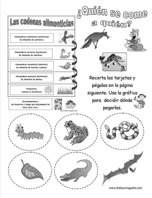 Cadena Alimenticia Science English Spanish Suscríbete Y Recibe Un Sinnúmero De Páginas Para Desc Ciencia Natural Ciencias De La Naturaleza Clases De Ciencias