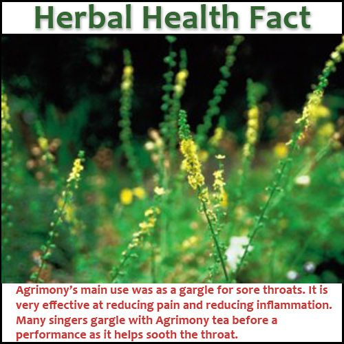Agrimony Benefits And Side Effects Flower Remedy Bach Flowers Healing Herbs