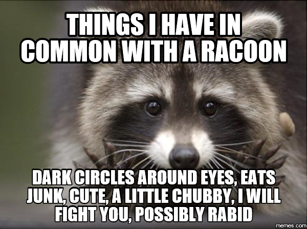 things i have in common with a raccoon meme google. Black Bedroom Furniture Sets. Home Design Ideas