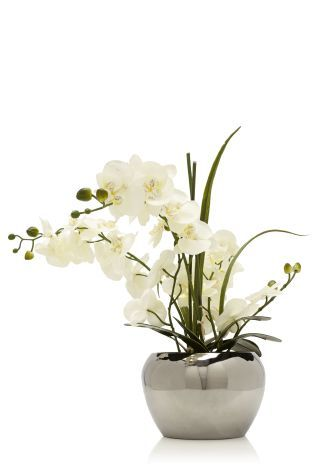 Contemporary White Phalaenopsis Orchids In Round Silver