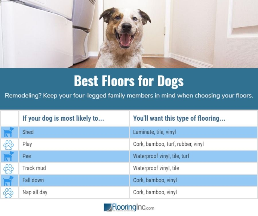 What's the Best Flooring for Dogs Best flooring, Best