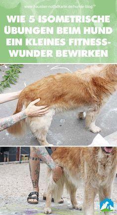 Wie 5 isometrische Übungen beim Hund ein kleines Fitness Wunder bewirken - jetzt im Haustier Notfallkarte Hunde Blog #hunde #erziehung