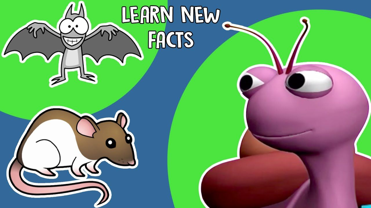 Interesting Facts About Animals | Learn New Facts | KidsVideoShow