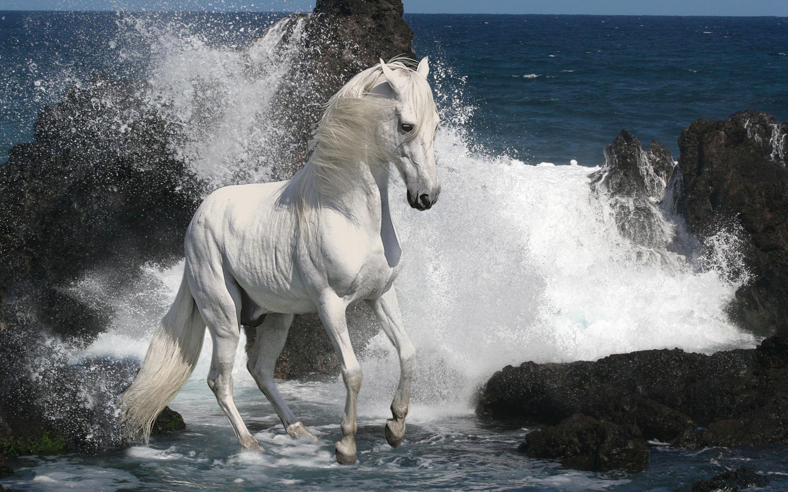 animal-horse_333354.jpg (JPEG Image, 2560×1600 pixels) - Scaled (40%)