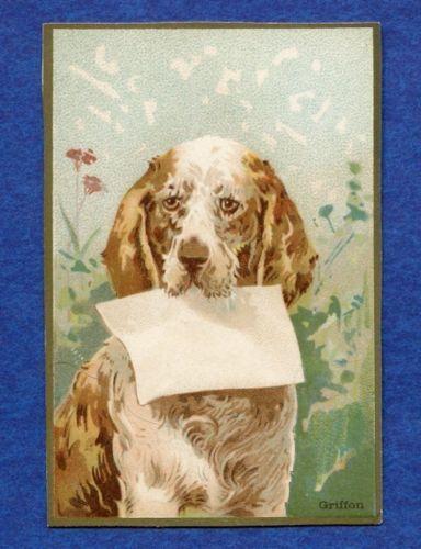 1900 Dog Series of Gold Bordered Calendar Trade Card Wanamaker Store - Griffon