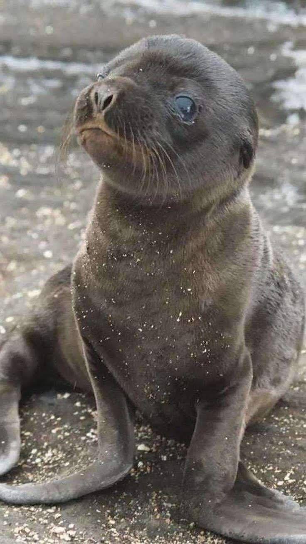 Ein Foto mit einer sehr starken Botschaft: Sei nett zu Tieren und zum Ozean! #animalesbebébonitos