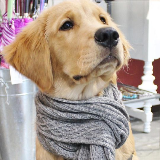 Thurman in his cozy scarf