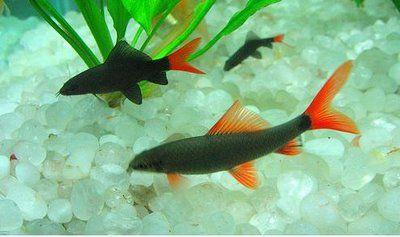 404 Not Found Freshwater Fish Fish Aquarium Fish