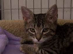Bengal Tabby Cat Mix Bing Images Tabby Cat Tabby Cats