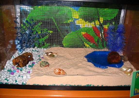Turn An Entire Wall Of Your Crabitat Into A Climbing Area Diy Crab
