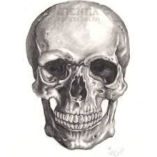 anatomically correct skull - Google Search