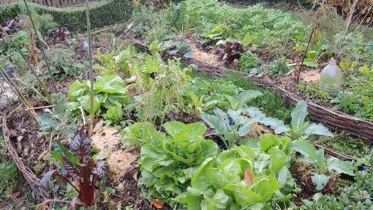 Légumes de novembre #recettenovembre Légumes de novembre