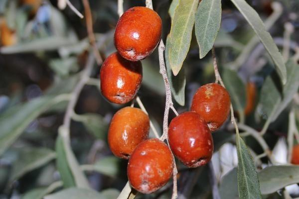 Pin On Tree Species